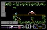 Arac C64 50