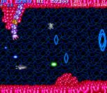 Salamander Arcade 05