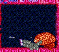 Salamander Arcade 24