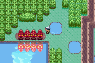 Pokemon Ruby Version GBA 243
